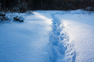 A path in the snow
